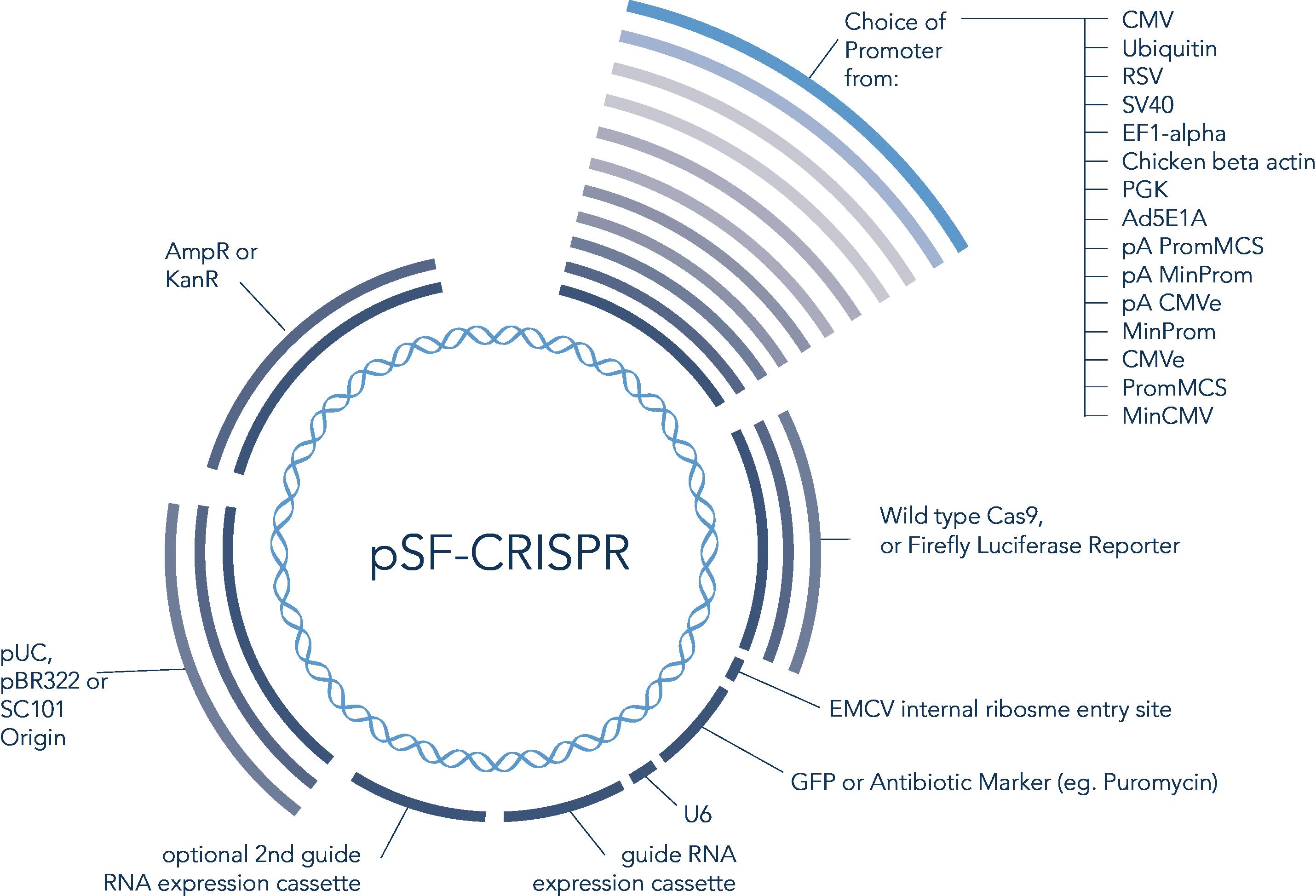 CRISPR_03.png
