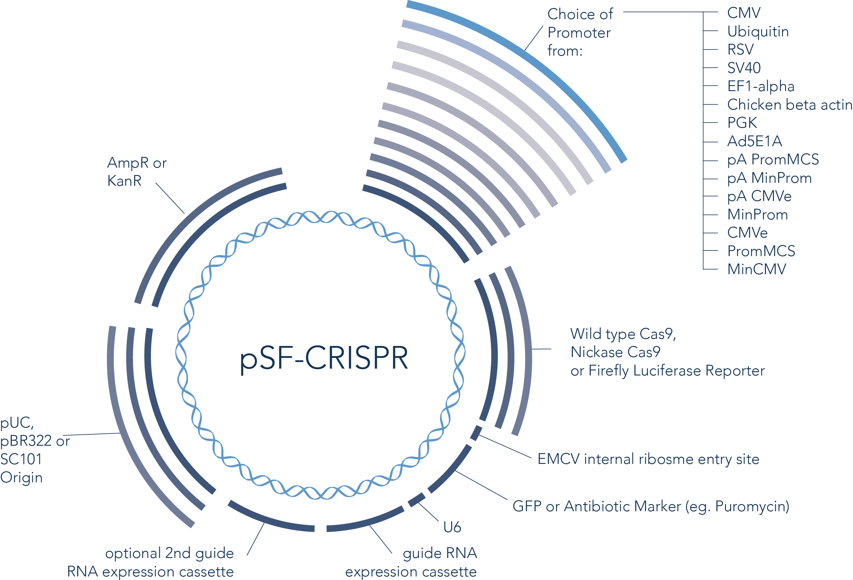 Overview of Crispr Vector