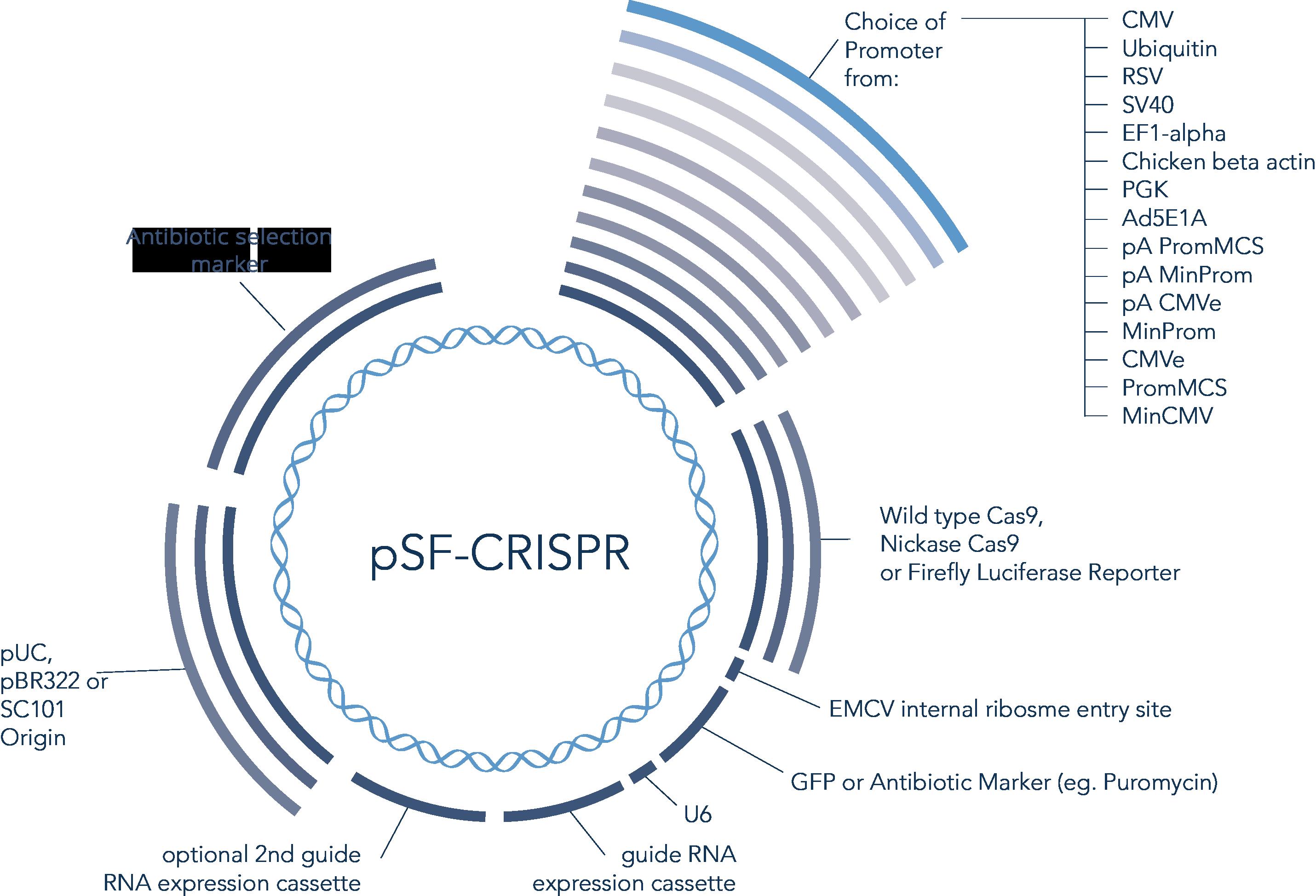 Overview of Crispr Vector