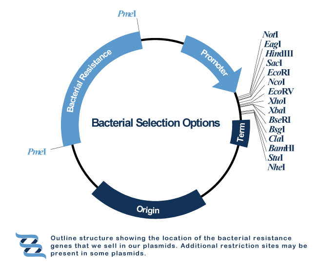 antibiotic selection